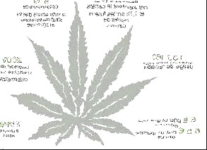 legislation-cannabis.jpg